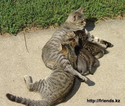 Картинки коты папа