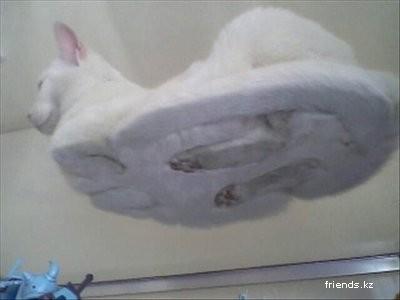 Кошачий секрет (3 фото)