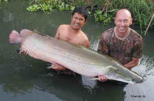 Февраль 2005 г. Банг Сэм Лэм, Бангкок.  Рыба: Меконгский Сом (Пла Бык).