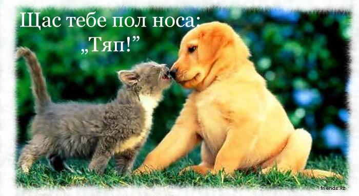 Фото на тему Прикольное фото про кошек посмотреть.
