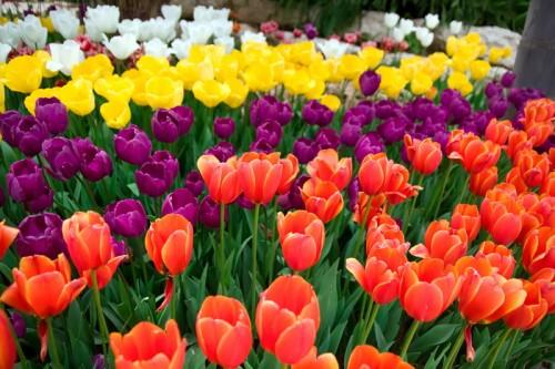 תמונה של פרחים