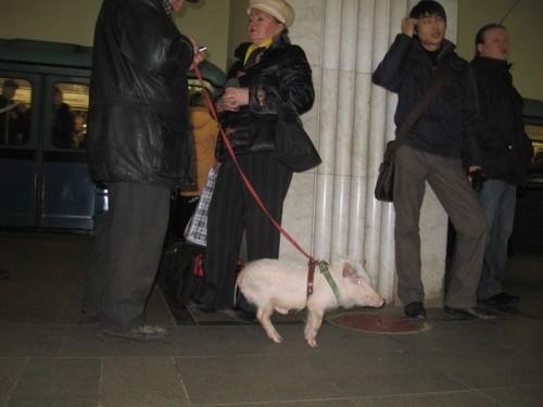 Пассажир московского метро