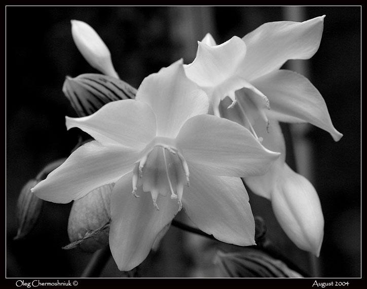 Печать черно белых фото.
