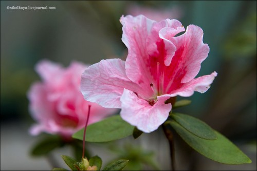 Цветочки к весне
