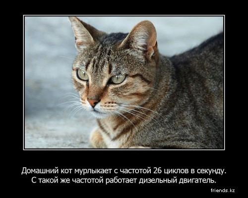 Немного фактов о животных в картинках