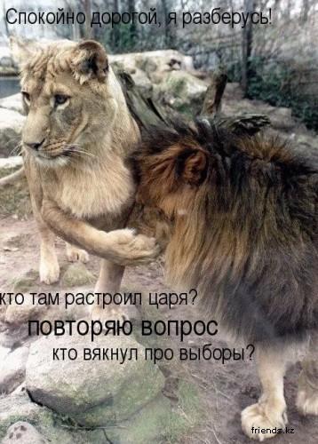 Наши милые животные