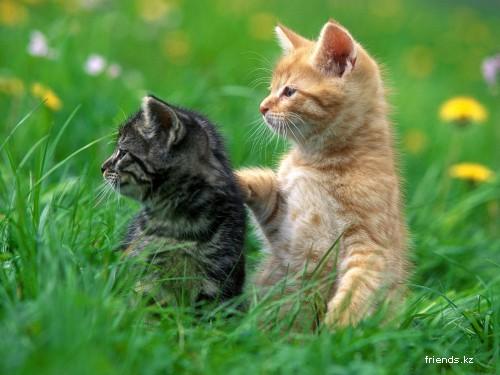 Обои с кошками (1 часть)
