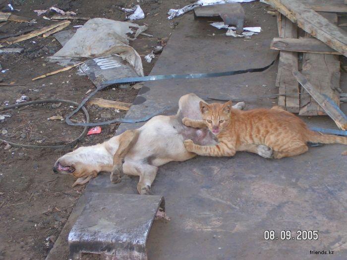 Фото приколы животных. Кошка и щенок отдыхают по своему, фотки кошек