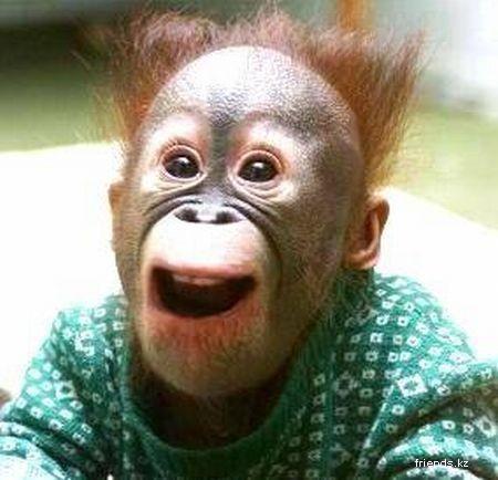 1245317947_monkeys_14.jpg