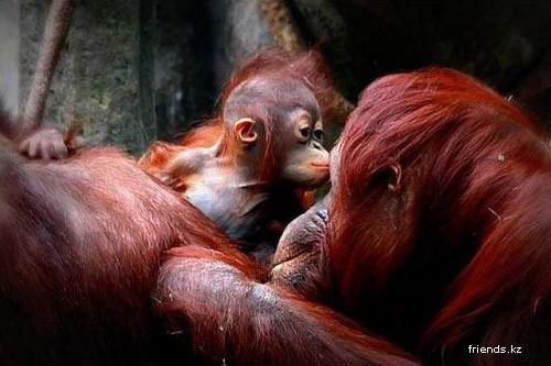 Детеныши зоопарков