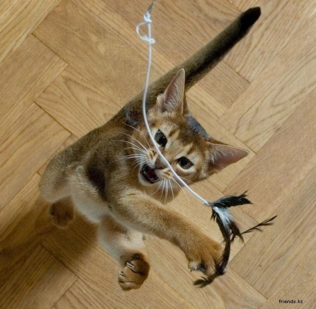 Playing with Cats (12 pics) - Izismile.com