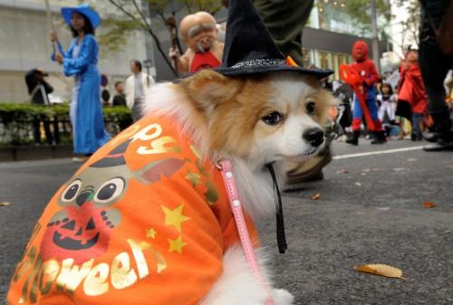 Счастливого Хеллоуина