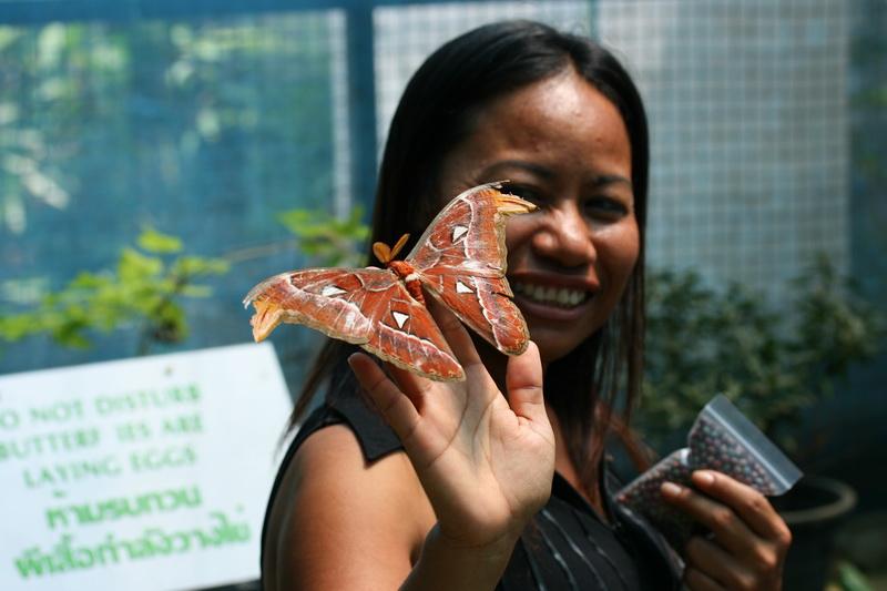 сад бабочек пхукет отзывы оказывает услуги подготовке