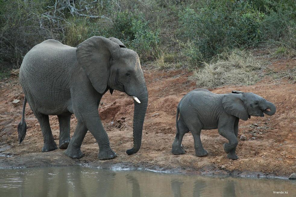 называется успех если слоны в южной америке снять аренду