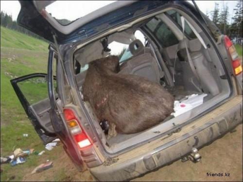 Сбили лося