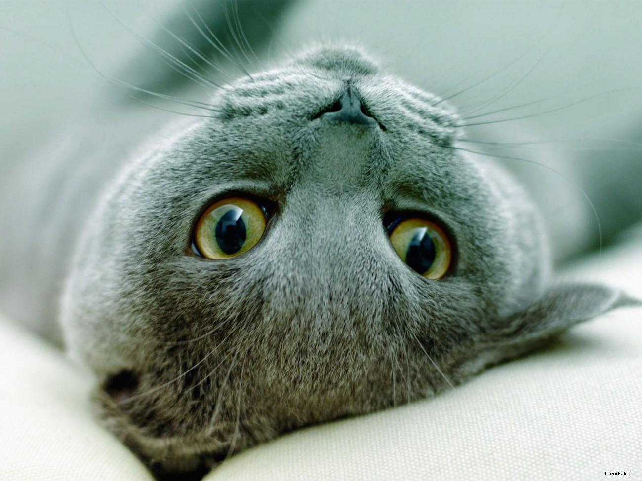 И я надеюсь, что на нашем Дриме найдутся любители кошек.