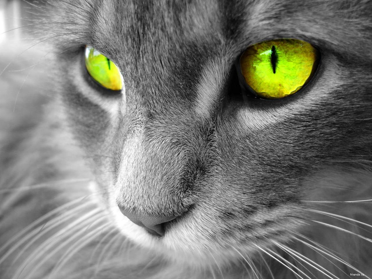 Кошка не может лицемерить.  Если кошка любит тебя, ты это знаешь.