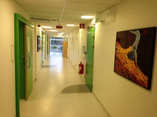 Как выглядит кабинет сдачи спермы в Швеции