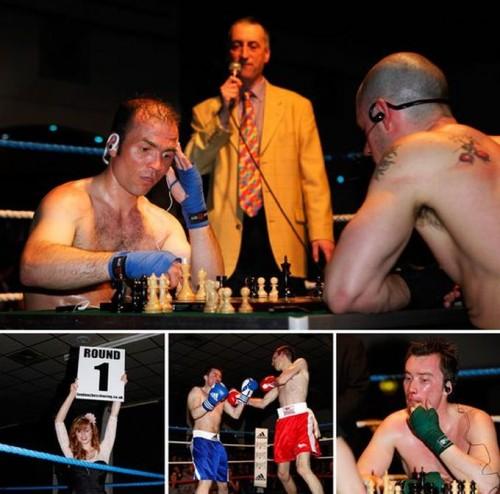 Бокс + шахматы