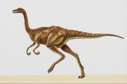 Рисунки динозавров.